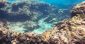 Doğu Akdeniz'deki fay kırığı deniz canlılarına yuva oldu