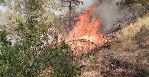 Kahramanmaraş'ta 500 dönüm ormanlık alan zarar gördü
