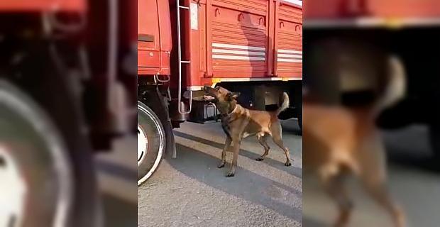 Adana'da uyuşturucu operasyonunda 9 şüpheli yakalandı