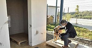Adana'da kazada yaralanan köpek tedaviyle yeniden yürümeye başladı