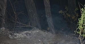 Amanos Dağları'ndaki örtü yangını kontrol altına alındı