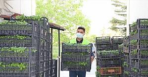 Antalya Büyükşehir Belediyesi'nden çiftçilere fide desteği