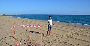 Antalya'da caretta carettalar, yumurta bırakmaya başladı