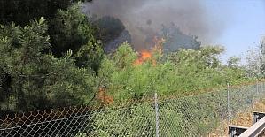 Çukurova Üniversitesine ait ormanlık alanda çıkan yangın söndürüldü