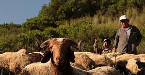 Hatay'da 30 yıllık çobanının bitmeyen meslek aşkı