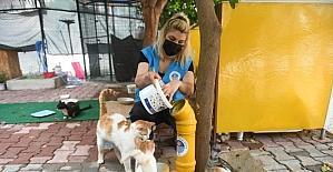 Mersin ve Hatay'da tam kapanmada sokak hayvanları unutulmadı