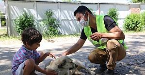 Mersin'de tam kapanmada sokak hayvanları unutulmadı