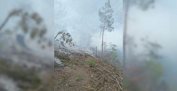 Osmaniye'de çıkan örtü yangınında 10 dekar alan zarar gördü