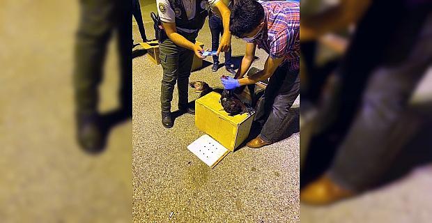 Osmaniye'de evde horoz dövüştüren 8 kişiye 150 bin 152 lira ceza kesildi