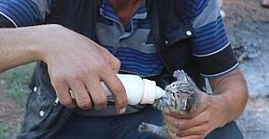 Osmaniye'de tarlada bulunan yaban kedisi yavruları bakıma alındı