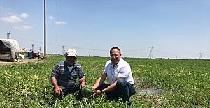 Tarsus Ziraat Odası Başkanı Veyis Avcı, çiftçileri ziyaret etti
