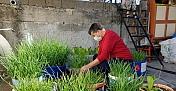 Atık malzemelerden yaptığı saksılarda sebze meyve yetiştiriyor