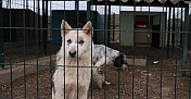 Antalya'da barınaktaki hayvanlar için elektrikli ısıtıcı kuruldu